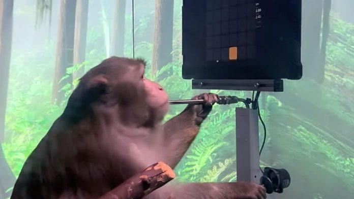 Neuralink Monkey Video Game
