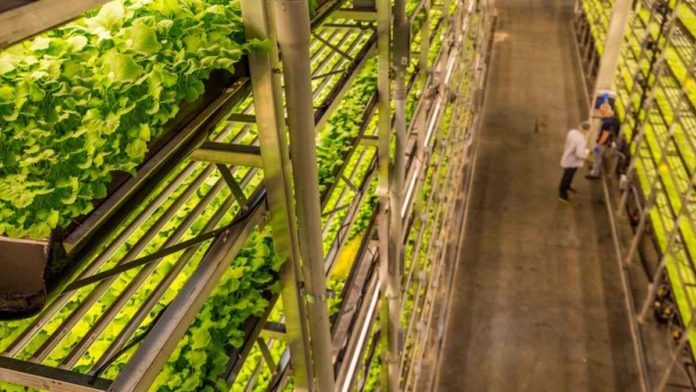 AeroFarms Partners with Nokia to Develop Artificial Intelligence Plant Vision technology