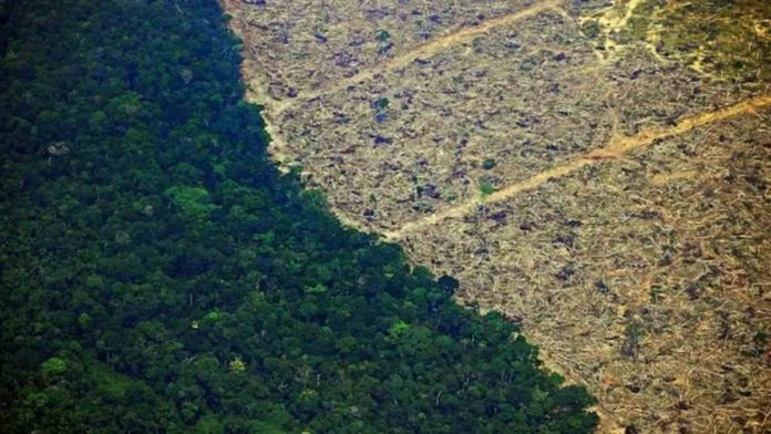 Artificial Intelligence is now helping Forecast Amazon Deforestation