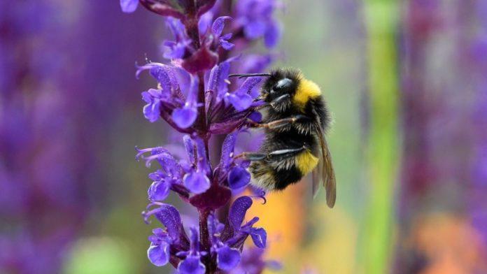 Pollination Robots, robotics, Robot in agriculture
